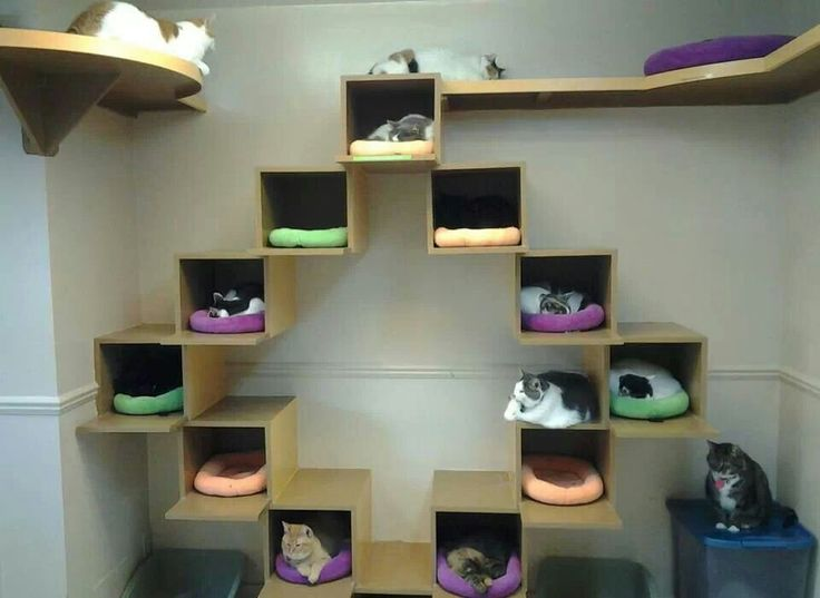 cat houses what if you got an ikea box furniture set and had dedicated cubes for cat beds with ledges on certain cubes - Cat Room Design Ideas