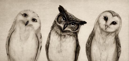 "ART PRINT/ MINI (10"" X 6"")  Isaiah K. Stephens (isaiahstephens) The Owl's 3 by Isaiah K. Stephens"