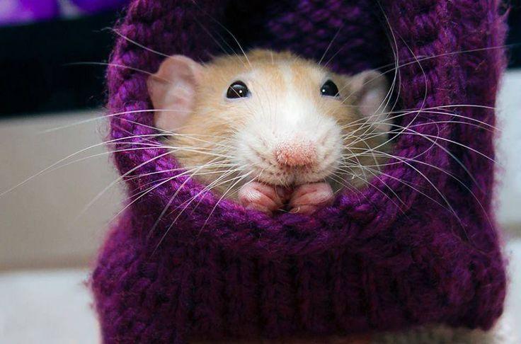 Voici quelques images des aventures de Marty Mouse, une souris, qui était en fait un rat domestique, qui s'amusait plutôt bien.