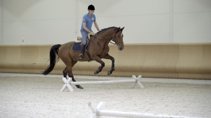 Image: Show jumping tutorials (2016) Kuva: Taitava esteratsukko (2016)