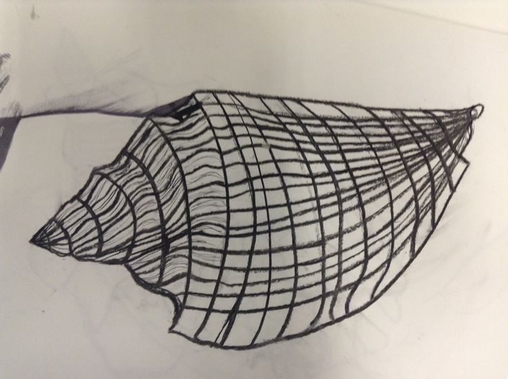 Contour Line Drawing Shell : Best shell artwork year images on pinterest shells