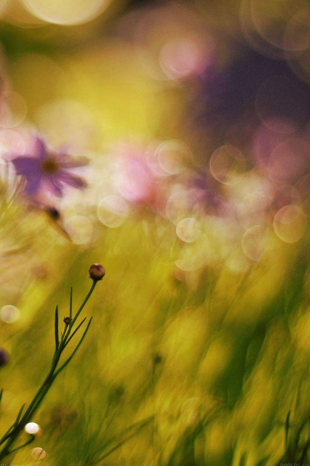 Flower Bokeh Spring Days Sweet #iPhone #4s #Wallpaper