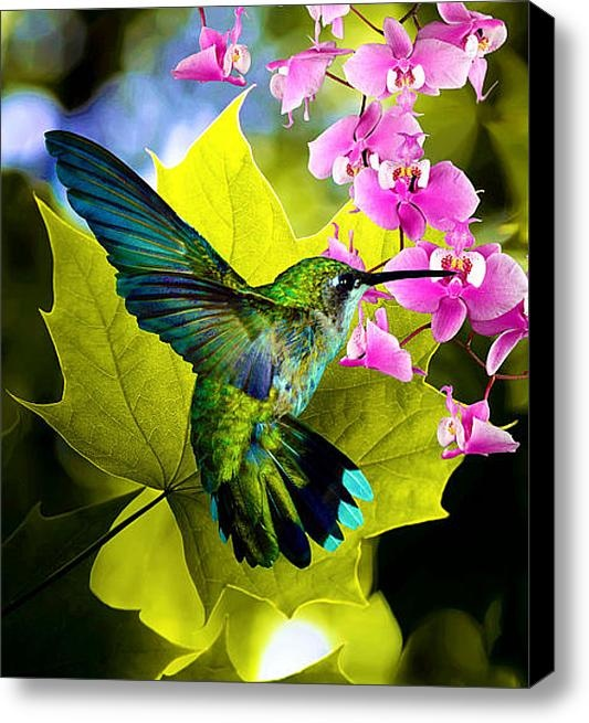 Humming Bird - I remember conversations at the kitchen table interrupted when a hummingbird came to the feeder.
