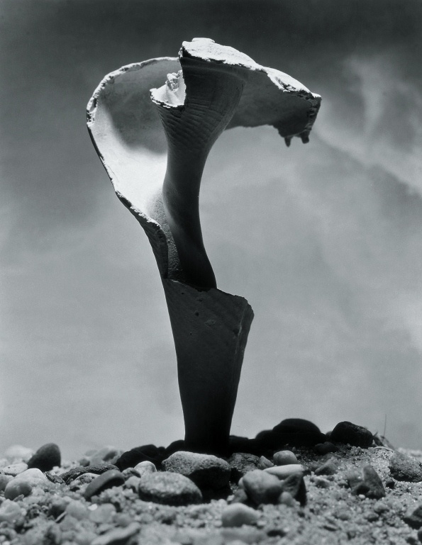 Shell by Andreas Feininger