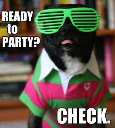 Funniestmemes Com Funny Memes Ready To Party Check Via