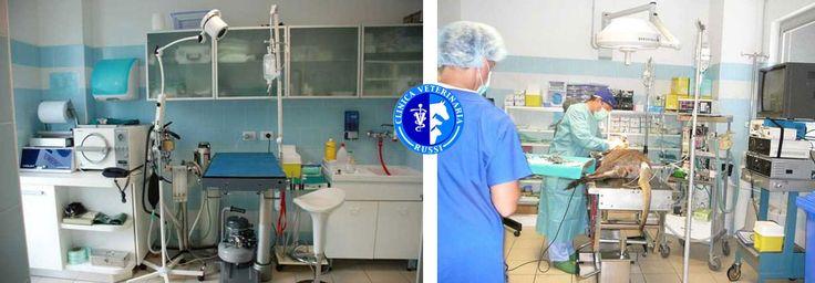 Clinica Veterinaria di Russi ha scelto Webee