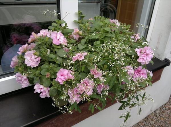 Kompozycje Kwiatowe W Donicach I Skrzynkach Floral Floral Wreath Wreaths