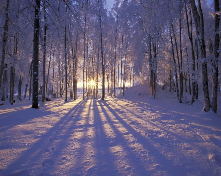 beautiful snow landscape: Forests, Winter Scene, Trav'Lin Lights, Alaska, Winter Wonderland, Trees, Winter Solstice, Winter Sunsets