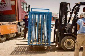 Four Paws International Rescues 9 Traumatized Wild Animals From Forsaken Zoo Near Aleppo Syria