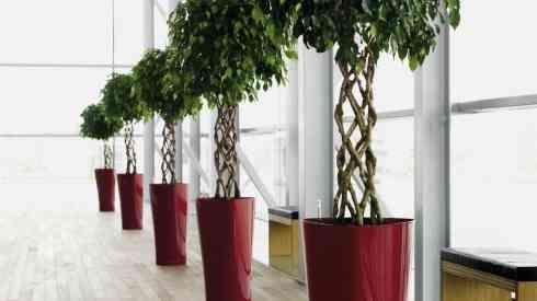 А между тем озеленение – это долговечное, презентабельное и очень красивое дополнение для любого интерьера.