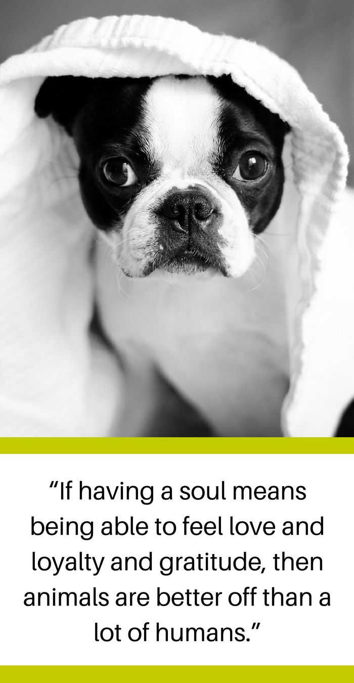 Love Animal Quotes 72 Best Favorite Dog Quotes Images On Pinterest  Dog Quotes