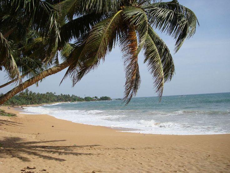 Induruwa Beach  palm #SriLanka