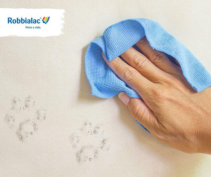 Ao pintar com Charme Extreme, da próxima vez que o seu cão deixar marcas na sua parede, é só passar um pano húmido!