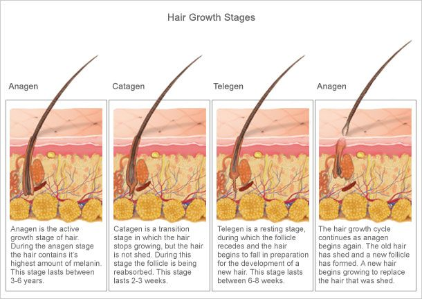 How hair grows. Only active hair follicles will respond to laser hair removal.