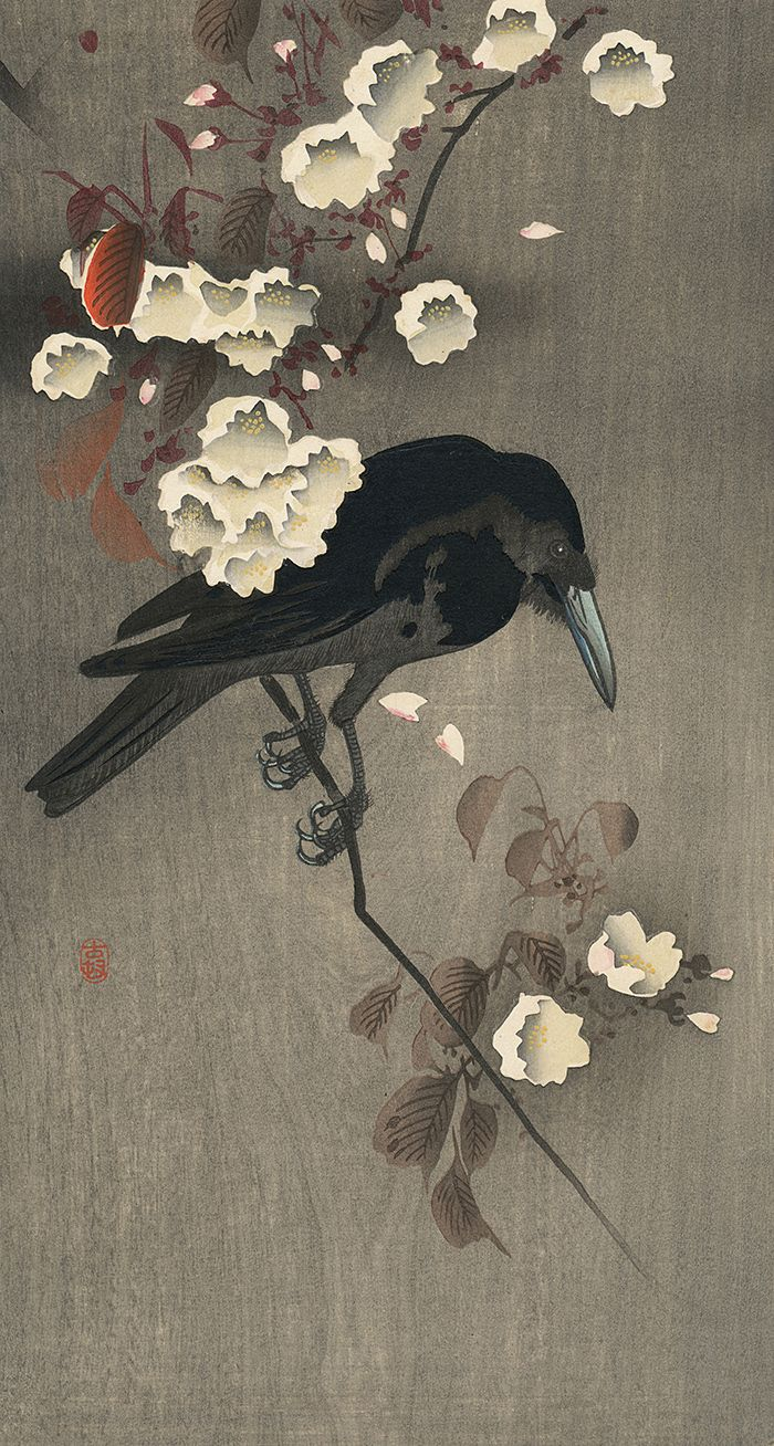 Crow on Flowering Cherry Branch, by Ohara Koson