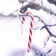 Image result for candy cane tumblr