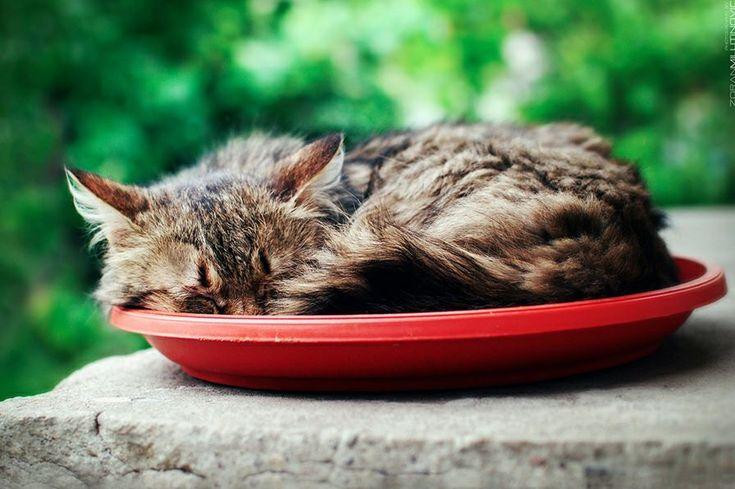 Kitty saucer.