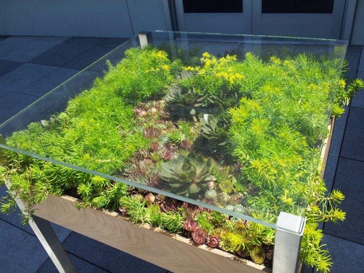 table basse carrée décorée de plantes succulentes