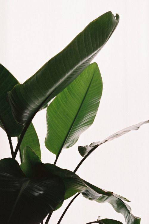 Nicolas Poillot - spring 11 #leaf