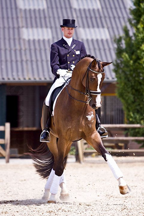Dressage... ♥ Repinned with gratitude by www.DressageWaikato.co.nz ♥ ...