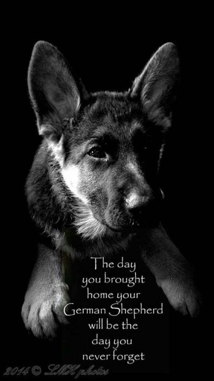23 best sergeant rex k9 quotes and inspiration about