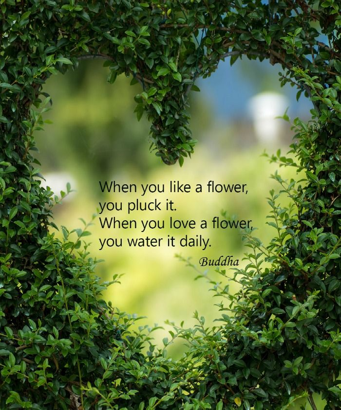 When you like a flower, you pluck it. When you love a flower, you water it daily.  Buddha.See more Inspirational Valentine's Day Love quote on Always the Holidays.