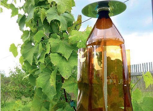 Защита урожая винограда от птиц