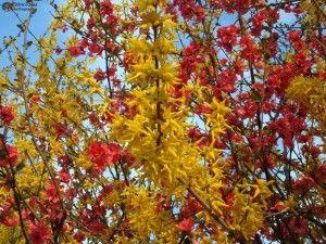 Flori de Martie
