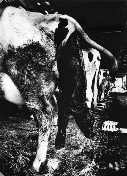 Scoffing Pigs - Nozomi Iijima by Emaho Magazine