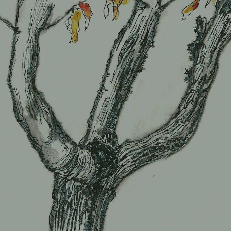 This picture is part of the Big Picture Art Project!  Drawing by Marjolijn Hof  Link in profile   Country: the Netherlands  The Story behind my drawing: October is here. The poor doomed chestnut tree in front of my house has been waiting for the power saws to arrive since early spring. It has been a long goodbye for us both. The blighted tree is council property which means one municipal department needs to apply to another municipal department for a licence to fell my tree which is not…