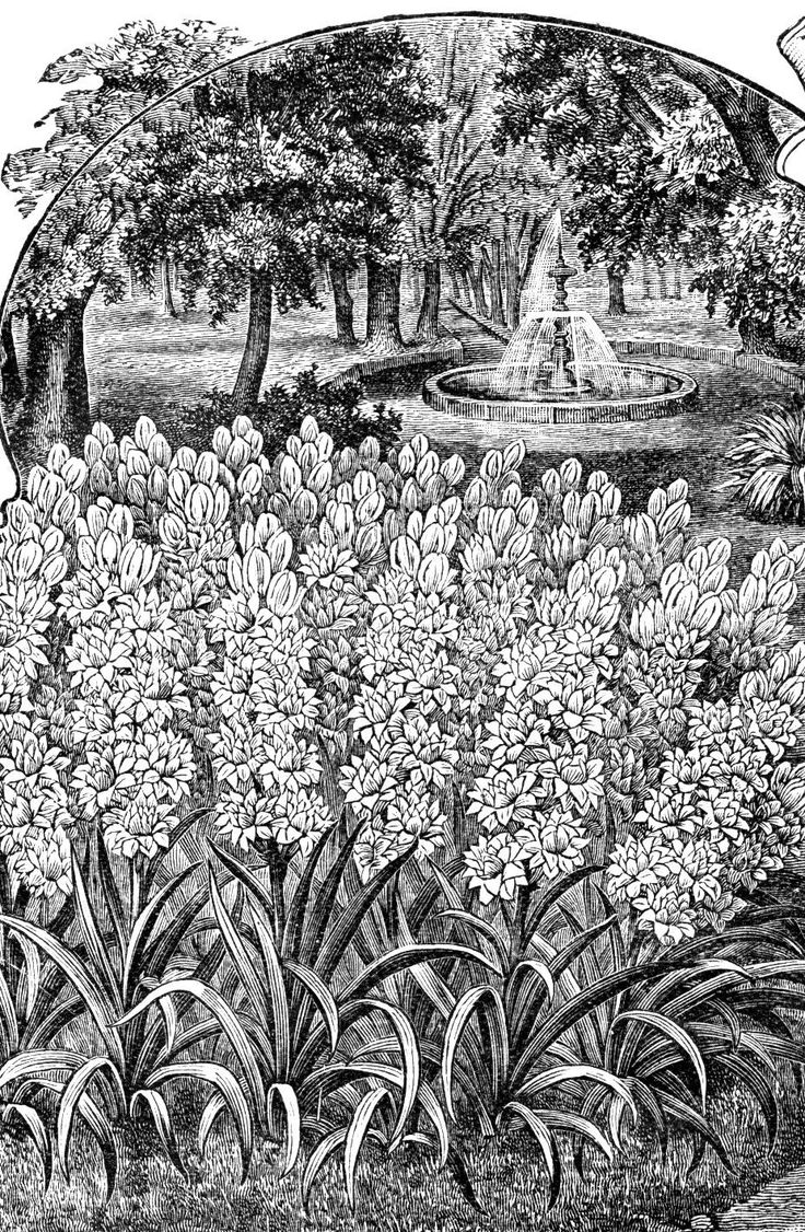 Coloring pages for donna flor - Find This Pin And More On Coloring Pages Landscapes Flowers Mushrooms Plants Trees