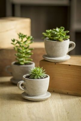 Concrete Tea & Coffee Cup Pots with Attached Saucer. Cute for succulents. $8 JEN you seriously need to make me these with your clay mold things that you do!!!