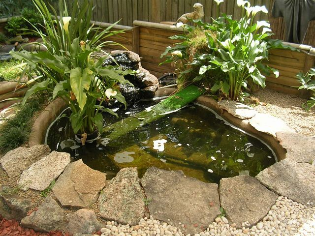 25 Best Ideas About Turtle Pond On Pinterest Ponds Fish Pond Gardens And Backyard Ponds