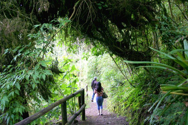 Caminata en la finca comunitaria Tahuallullo, visita actividades productivas como: vivero de orquídeas, viveros forestales, taller de artesanías, pequeñas plantas de quesos y mermeladas.