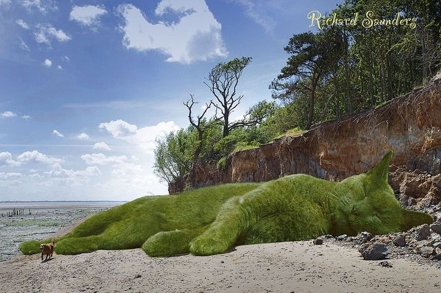 On a very hot day, The Topiary Cat went to an almost deserted beach to sunbathe. Sure scared that dog though!: