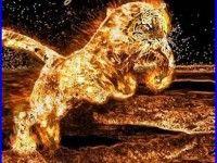 Tiger Fire Wallpaper 4121 HD Wallpapers