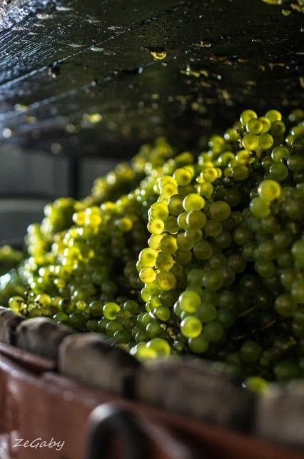 In the wine press...