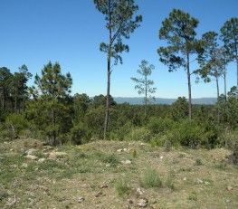 CI32710 - Villa Gral. Belgrano - Pcia. de Córdoba. Tipo: Campo 10 Has. Divisible terrenos de 1 ha Campo de 10.6 Has. Divisible terrenos de 1 Ha. 200 mts sobre ruta asfaltada y aproximadamente 550 mts hacia abajo de la montaña camino a La Cumbrecita, jurisdicción de Villa General Belgrano, sobre el corredor turístico de la villa. Terreno acantilado de montaña, tierra negra y muy pedregoso, 60% bosque de pino de aproximadamente de 35 años, 40 % especies autóctonas.