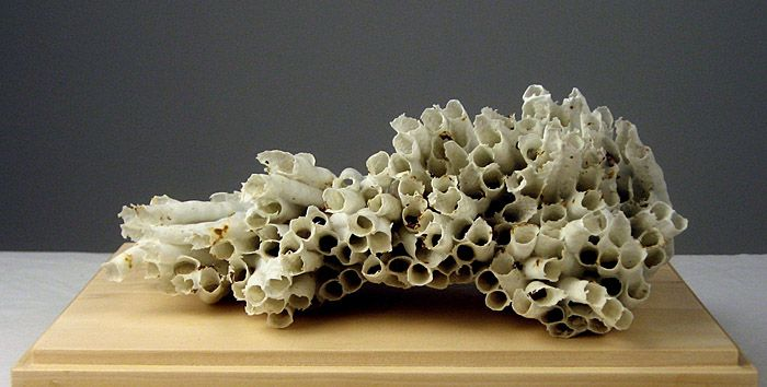 Jessica Drenk  -  mop head dipped in porcelain slip and fired
