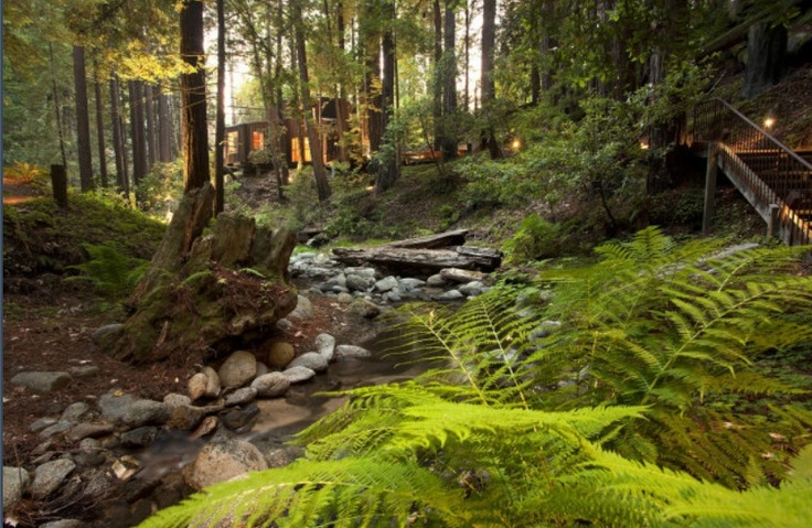 17 best house in the woods images on pinterest dreams for Big sur cabine e campeggio