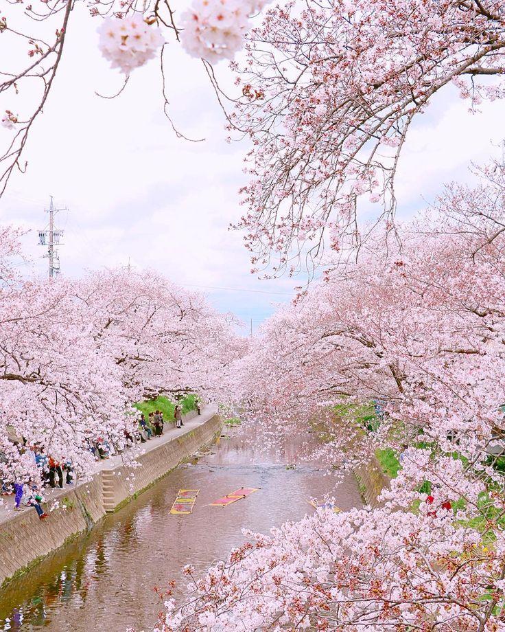 Beautiful Nature, Beautiful
