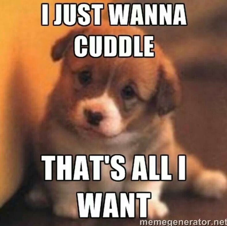 I will find you And I will snuggle you - I will Find You Meme ...