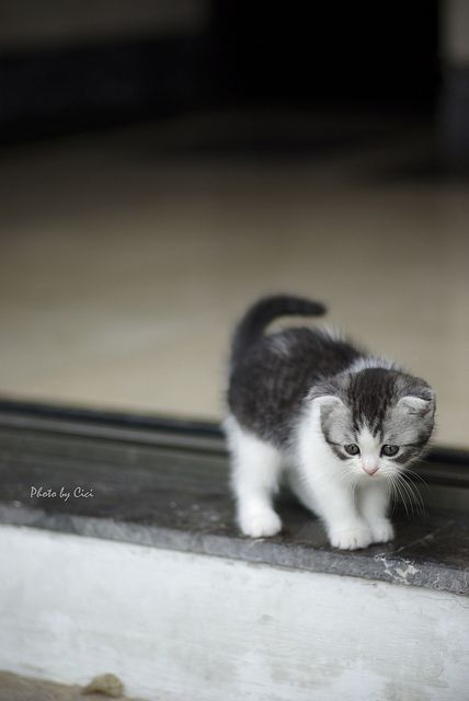 Oh my!!!!!!!!! I don't think I can get down to that next step.  Please come and help me because I'm still just a little baby kitty cat.......and I'm scared.