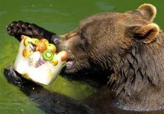Helados para un calor salvaje Pueden ser de fruta o de carne. Con ellos, los habitantes del Zoológico de Cali refrescan sus tardes. También cuentan con el servicio de piscinas climatizadas #animalessalvajes #zoologicodecali