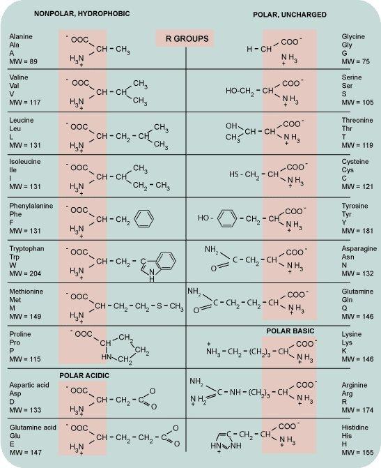 Amino acids chart, handy for any biochem major