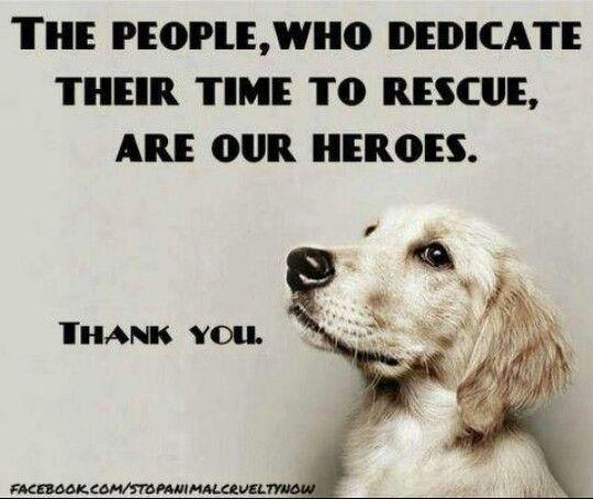 Thanks Rescuers