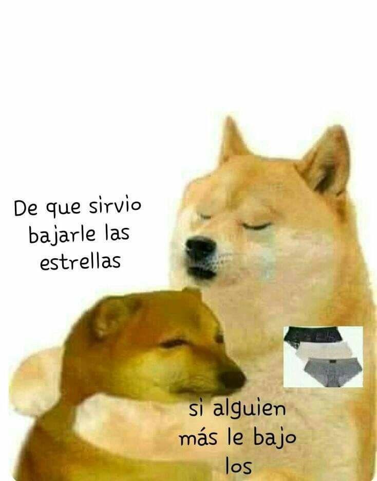 Abajo El Calzon Meme Gracioso Perros Graciosos Memes