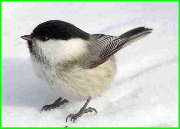 10 Jenis Burung Kecil Di Dunia Yang Lucu Menggemaskan Daftarhewan Com Burung Kecil Burung Jenis