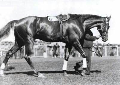Phar Lap at Randwick Racecourse Mounting Yard in 1931.