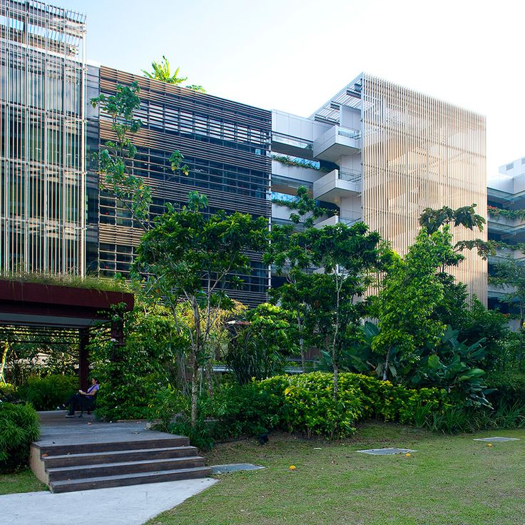 the concept of the biophilic city in the documentary singapore biophilic city In singapore, for the same project  2018 : arboricole, the inhabited tree for millennials, a biophilic project  vincent callebaut's city of science in rome is.